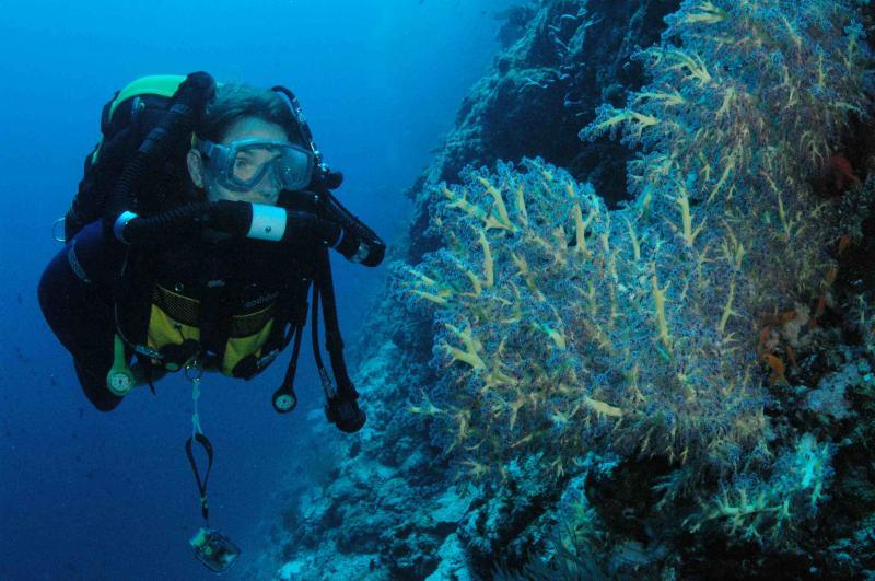 AP Diving